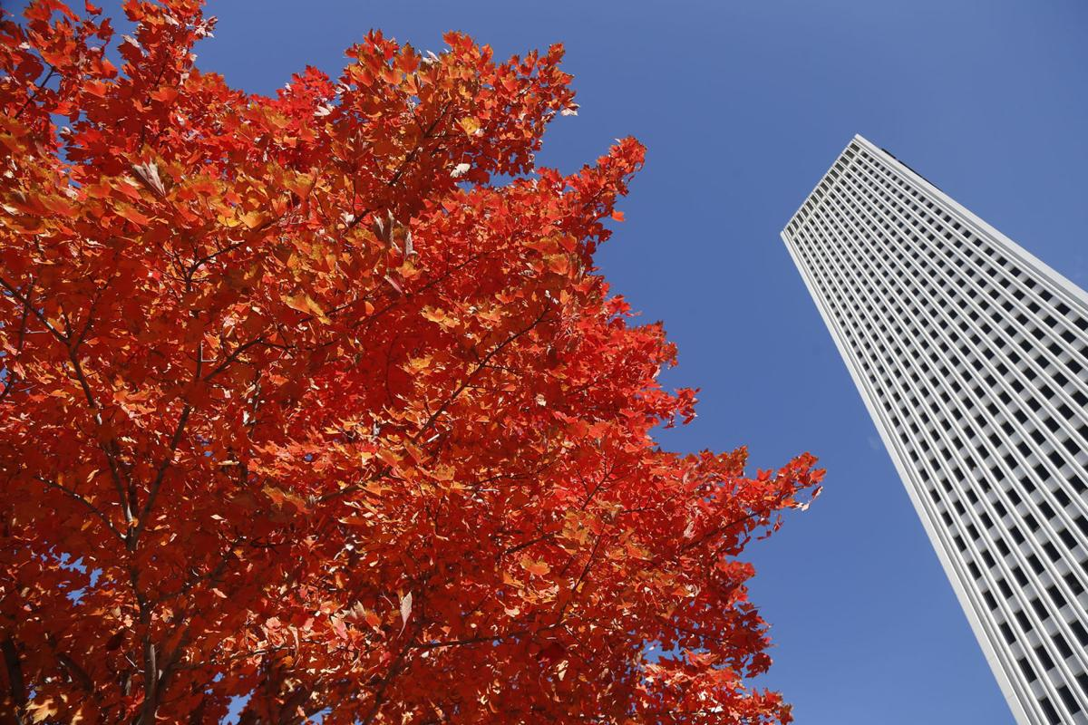 Local Fall Foliage Peak Likely To Be Weeks Away Some Experts Say