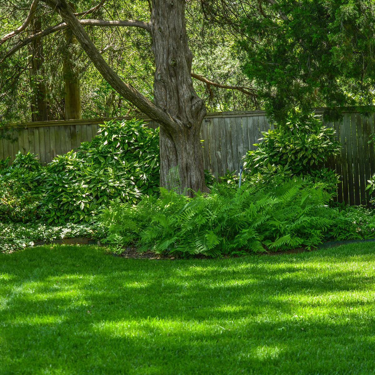 Options For Shade Plants Are Plentiful