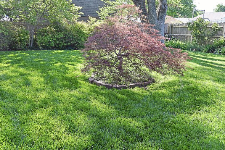 Master gardener find the best grass to grow in shaded for Tall ornamental grasses for shaded areas