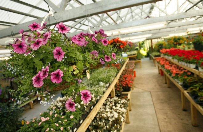 5 To Find Nurseries That Can Help You Your Green Thumb