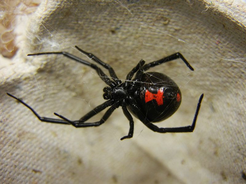 The 14 most dangerous (and some deadly!) critters in Oklahoma