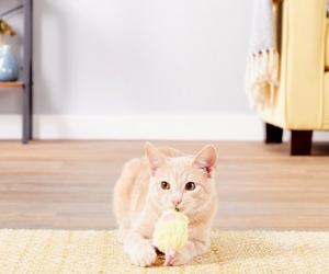 Cat Toys Under $10