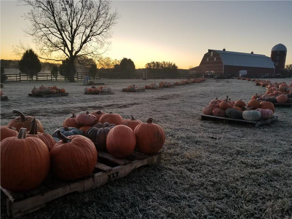 Pumpkin  Patch at Shepherd's Cross