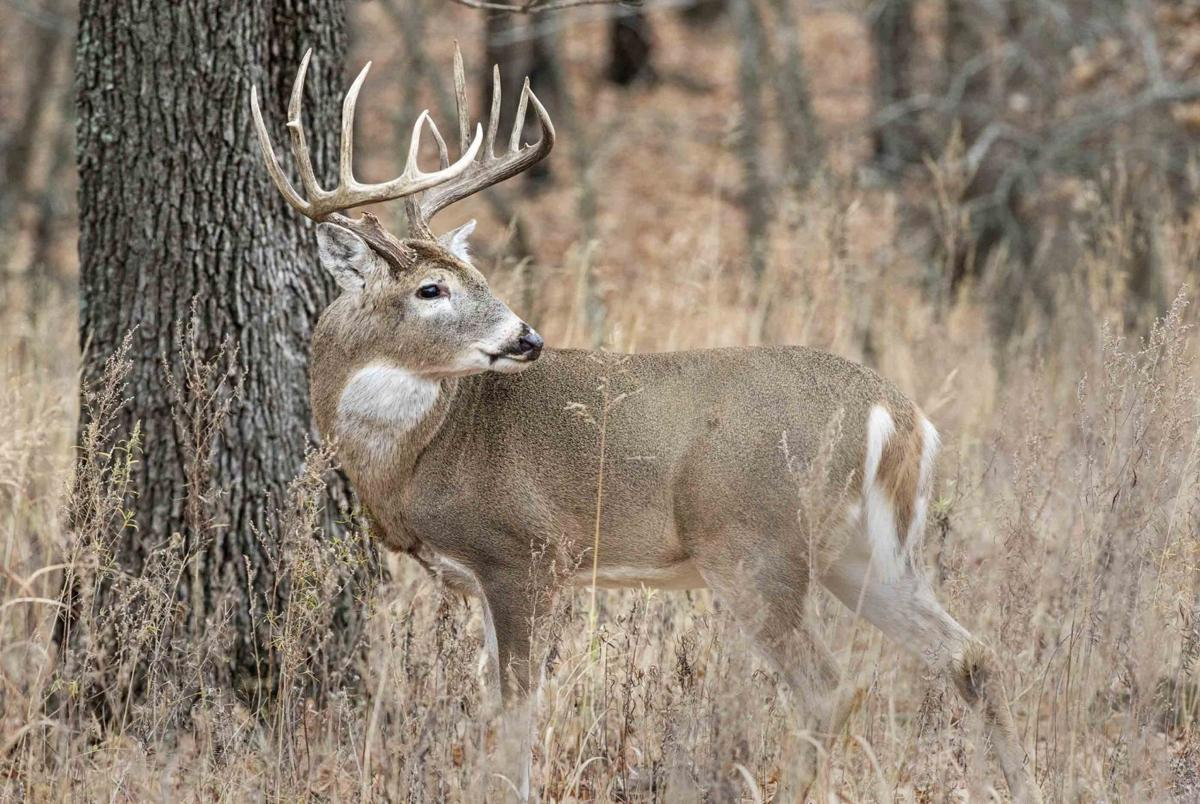eight point 10 point 600 million rifle season for deer means big