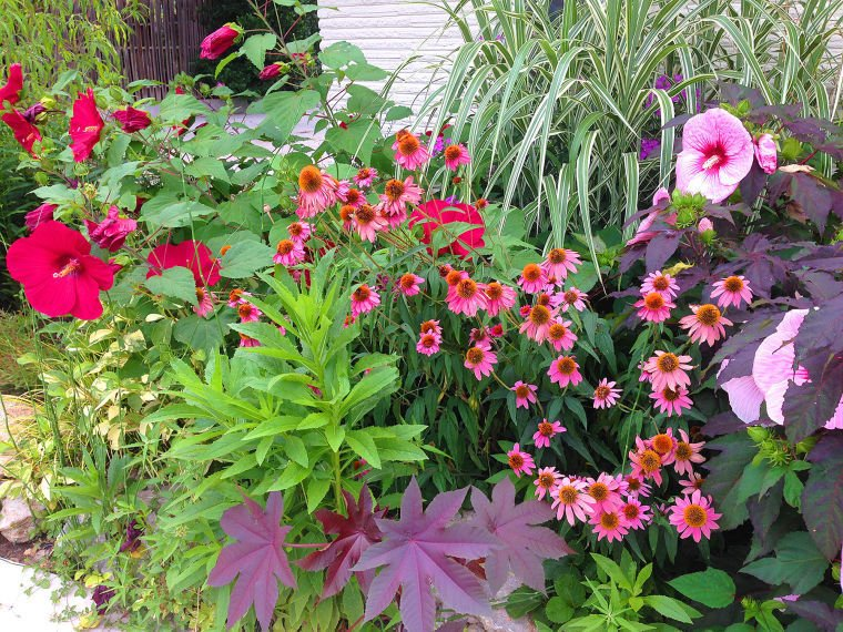Master Gardener: Heat tolerance makes Oklahoma native ...