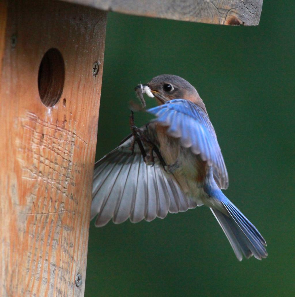 Bluebird betting on sports