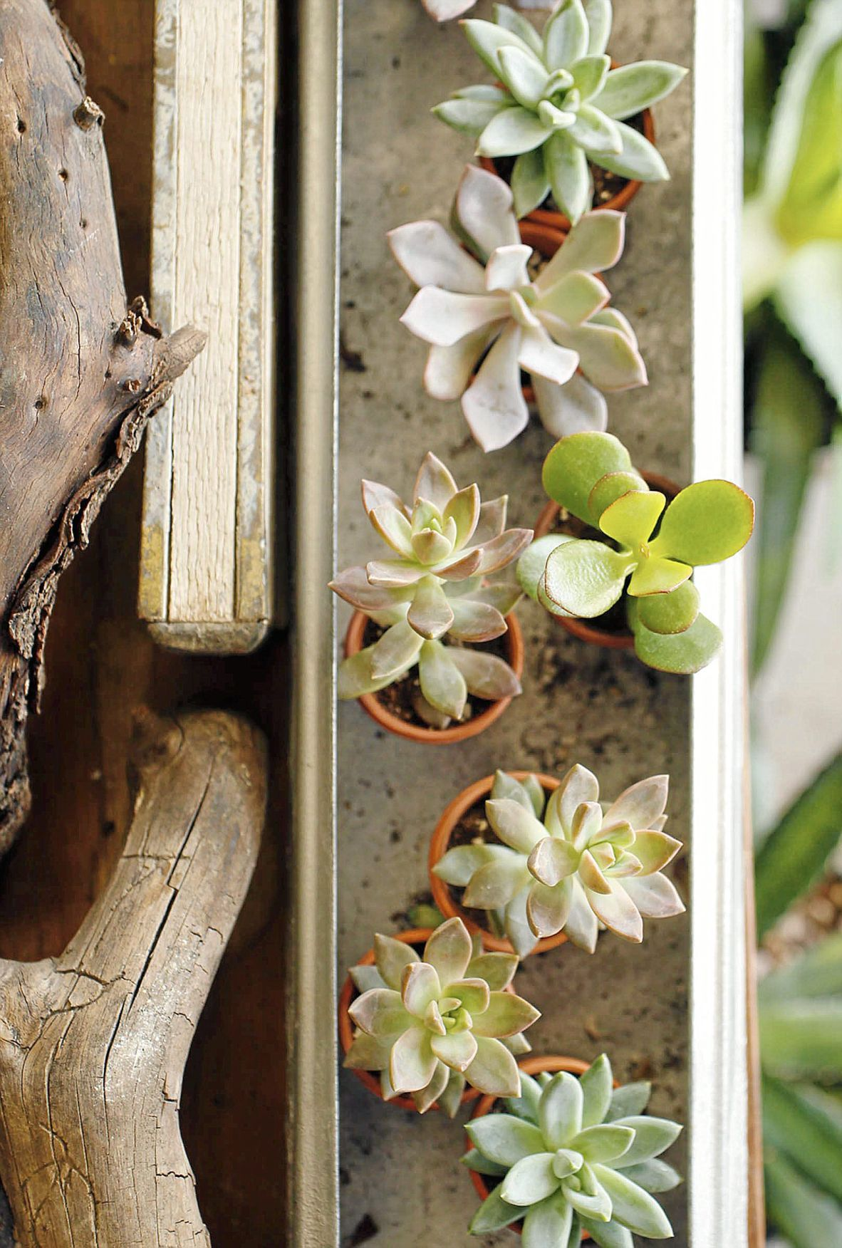 Succulents Offer Low Maintenance Beauty As Plant That Loves Oklahoma Heat Home Garden Tulsaworld Com