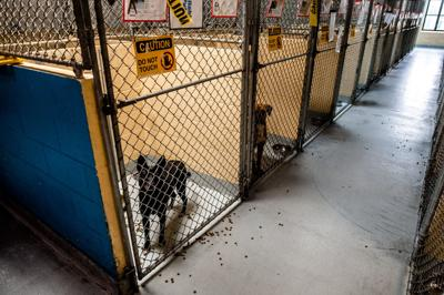 Rows of kennels
