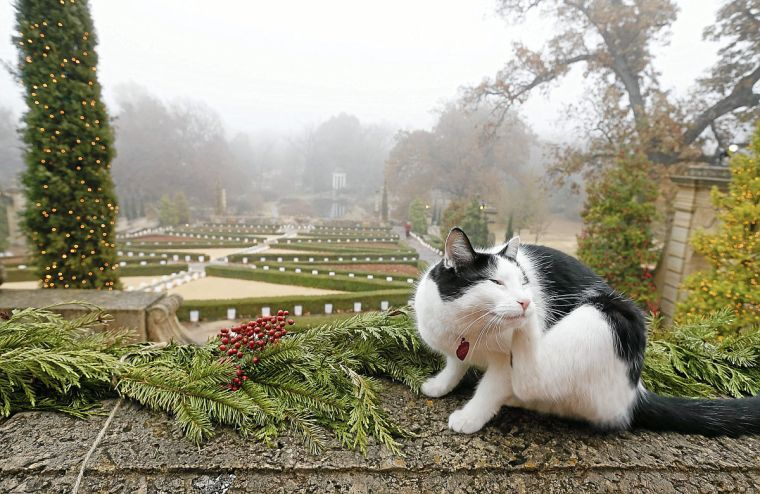Philbrook Cats