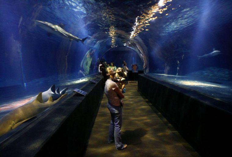 Oklahoma Aquarium Gets Dedicated Funding Source Jenks