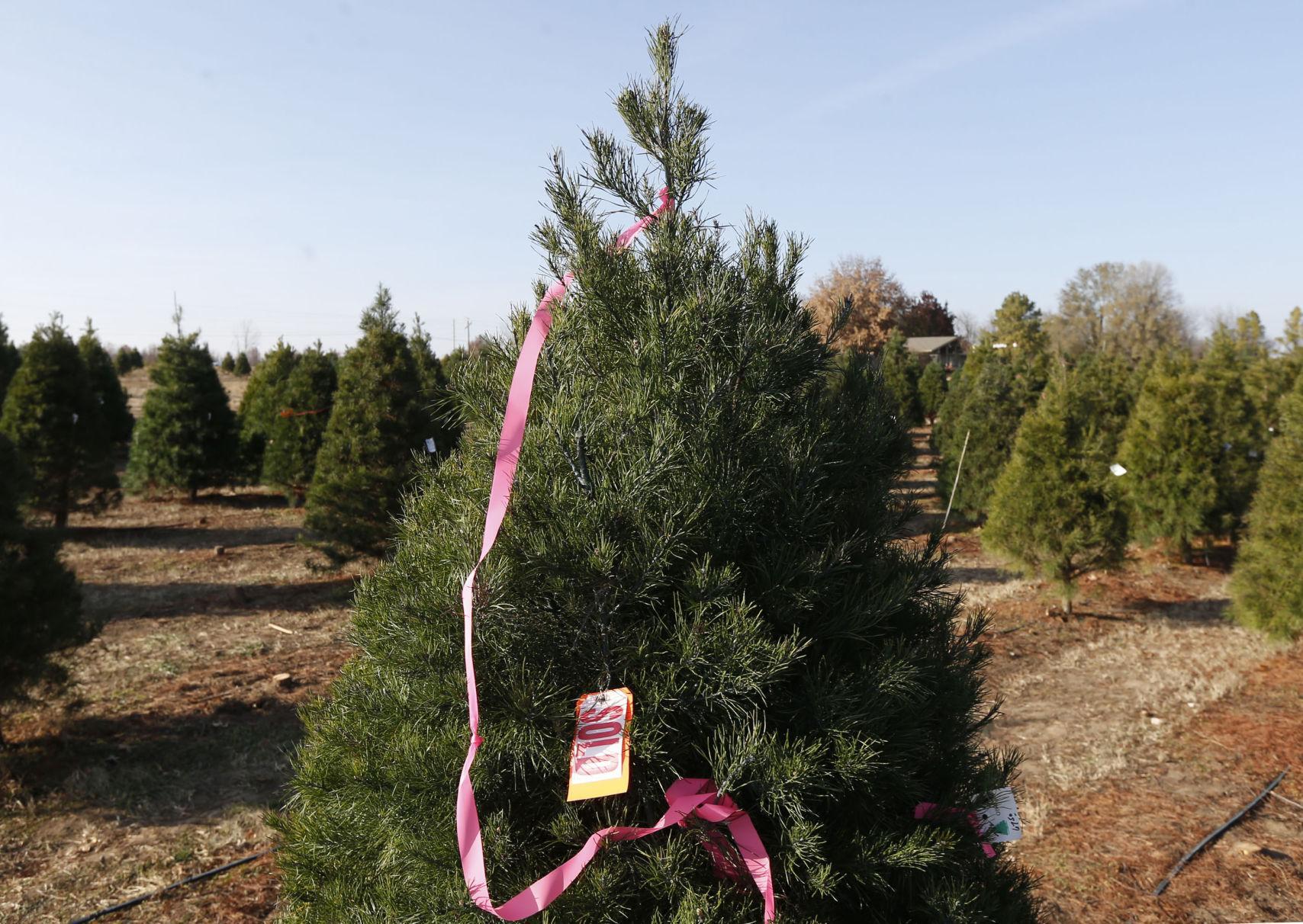 owasso christmas tree - Christmas Tree Farm Colorado