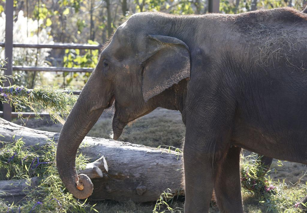 Elefant Snopp