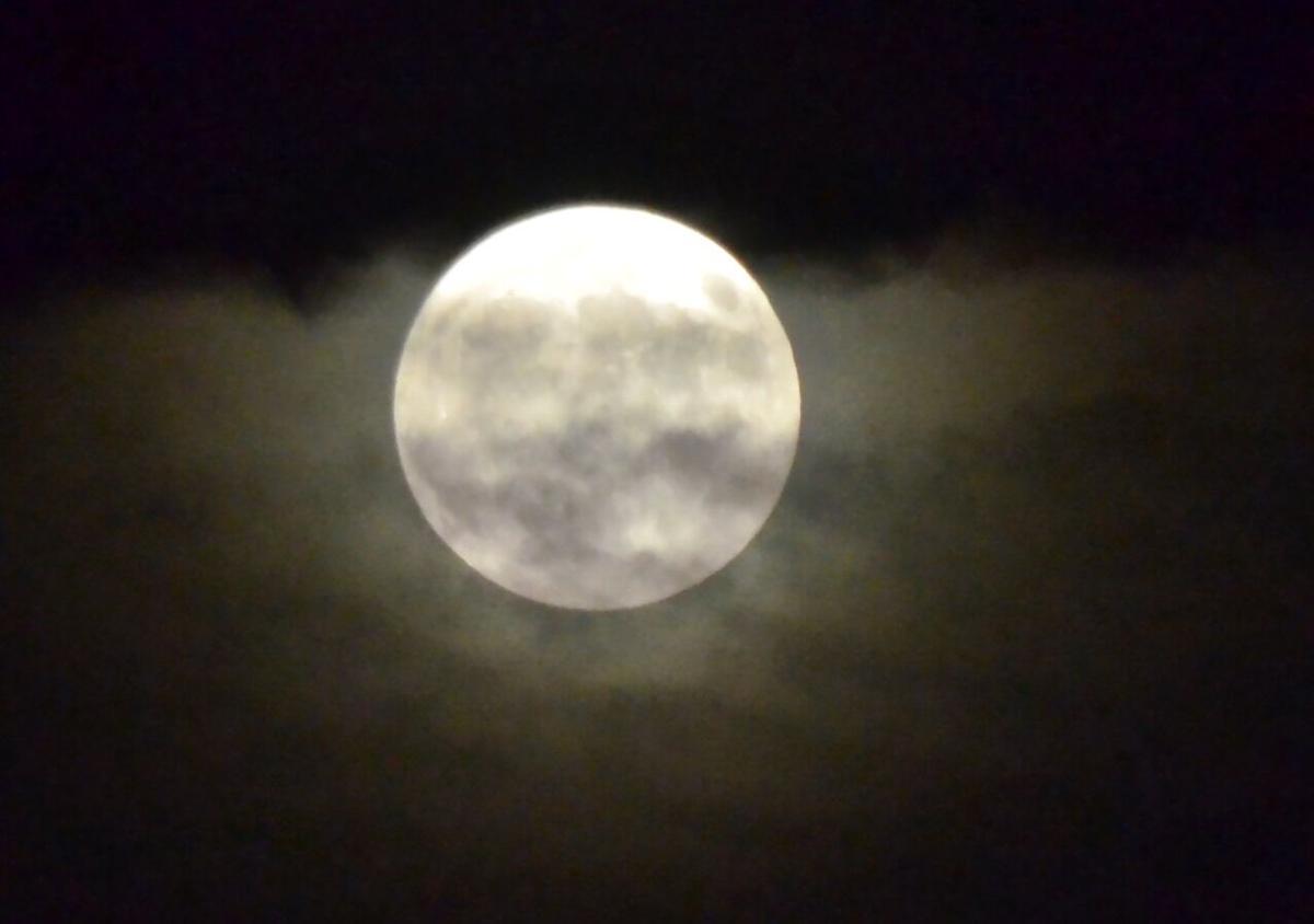 harvest moon-TUL0030388461
