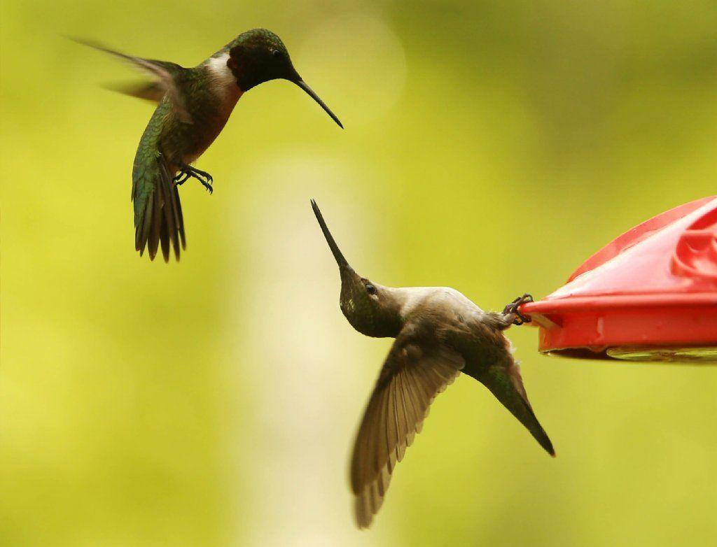 Picker gallery hummingbirds