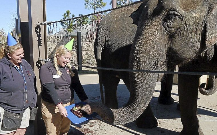 Tulsa Zoo remembers elephants 64th birthday with cakes party
