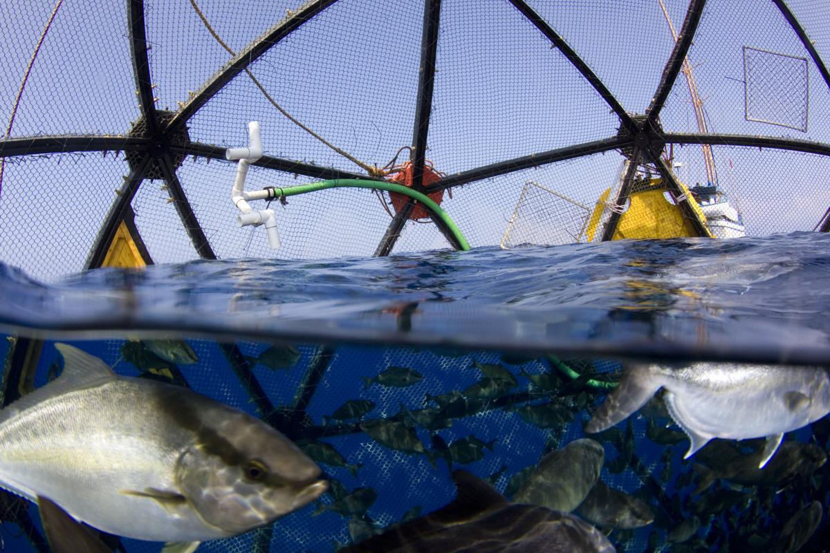 An experimental fish farm in Florida may pave the way to privatizing federal waters