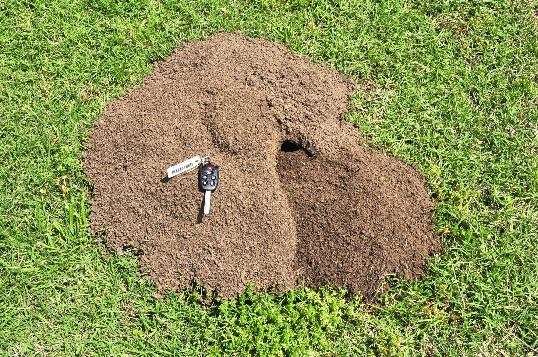 how to kill moles in my yard