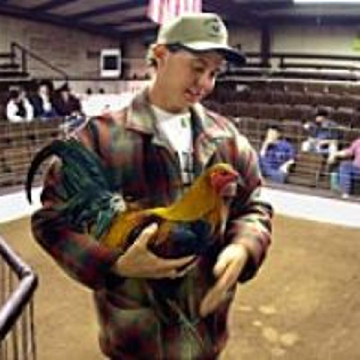 As the feathers fly | Archive | tulsaworld com