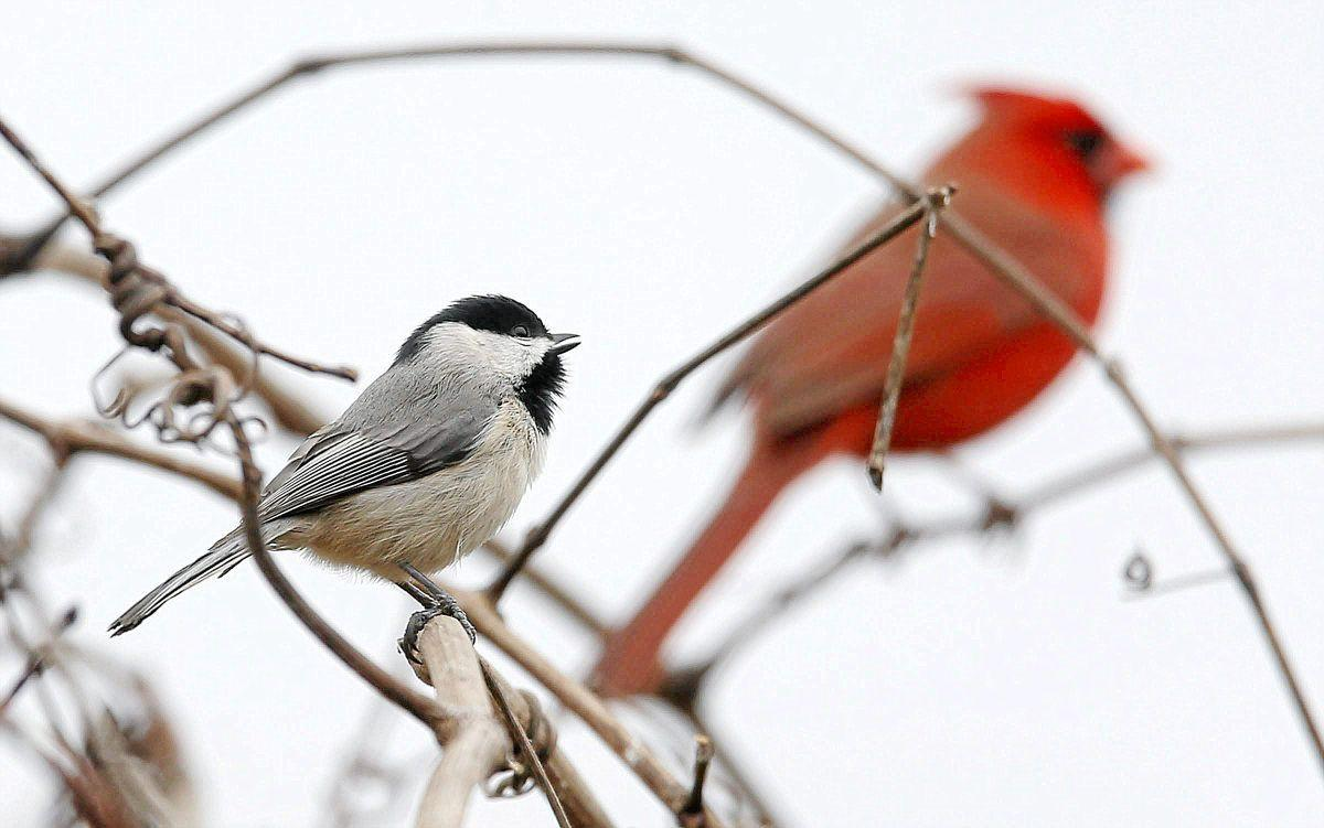 birdwatchers flock to oxley nature center for resident science