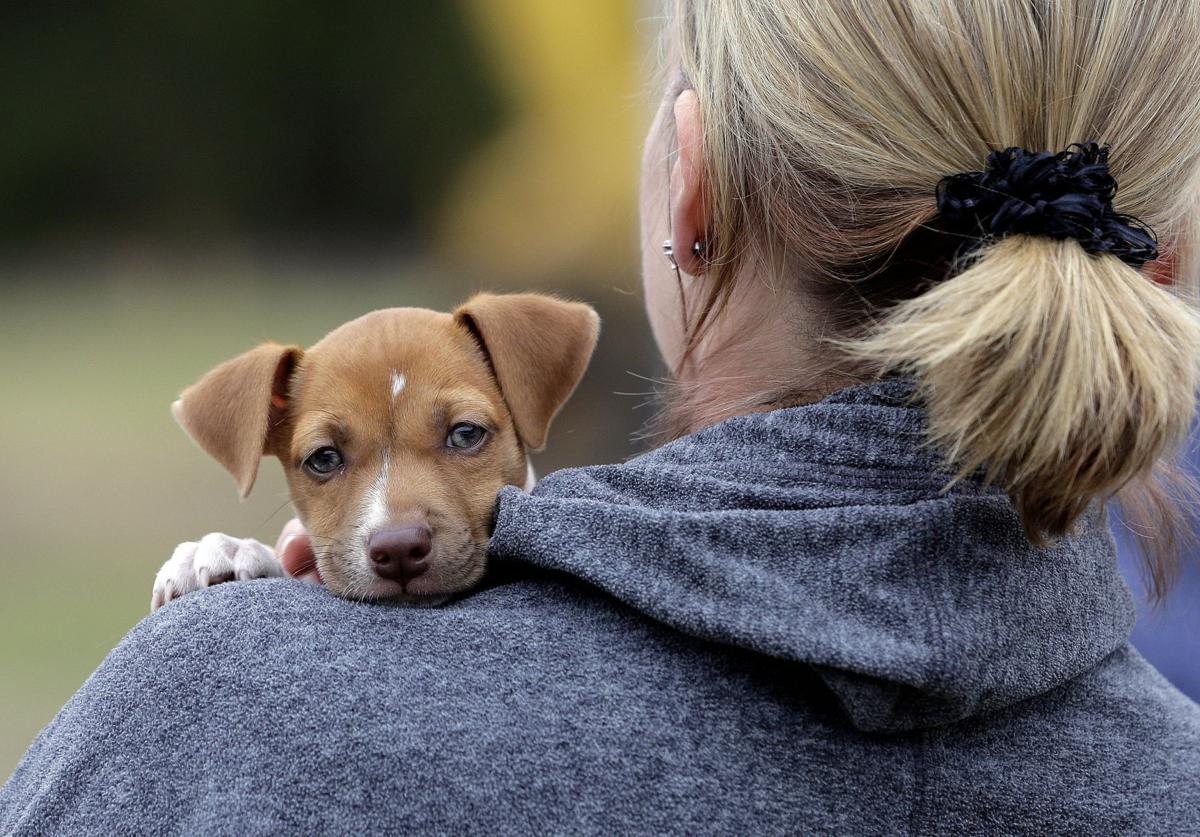 Broken Arrow's first dog park set for April opening | Local