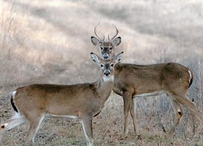moon sense deer hunting