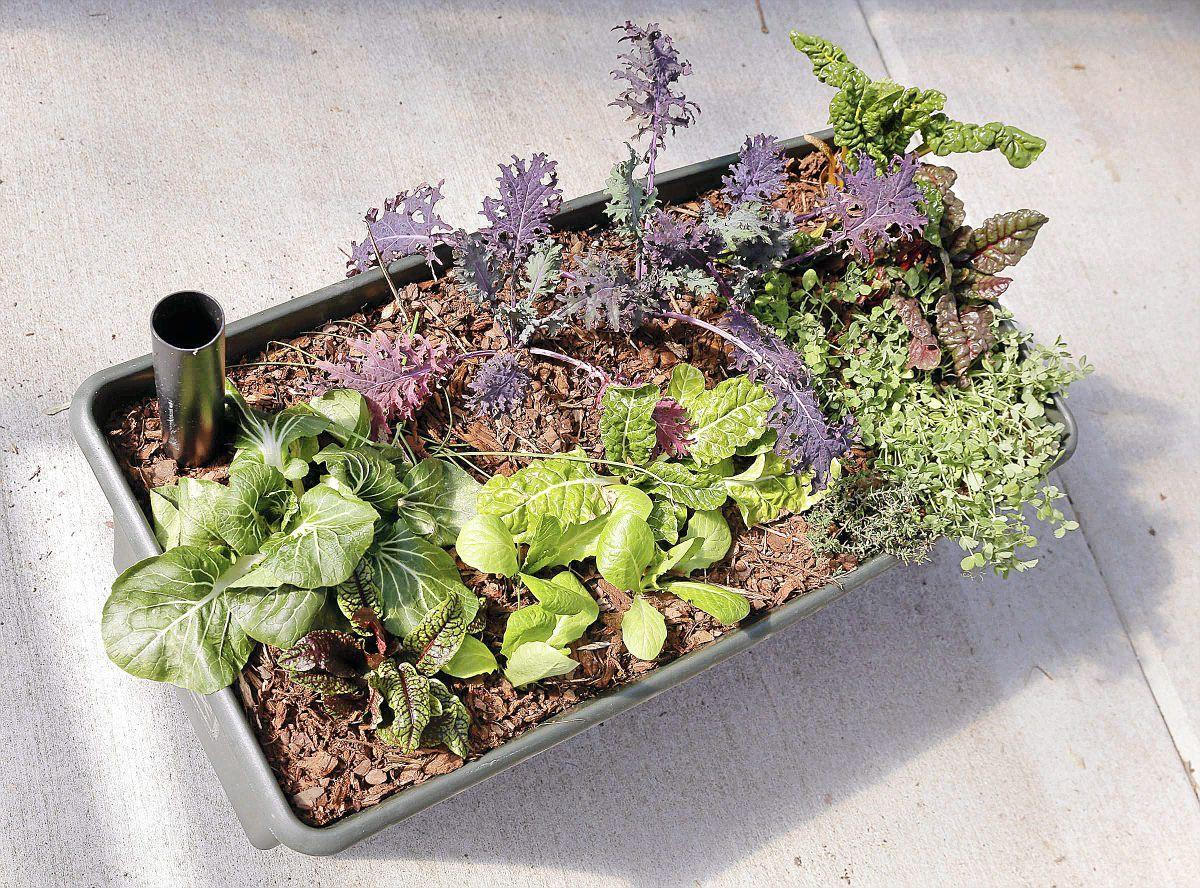 Gardening is made easy with help of containers | Home & Garden | tulsaworld.com