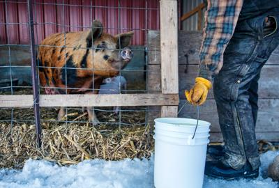 Whey beyond cheese: Sustainability boosts nutrition on & off the farm
