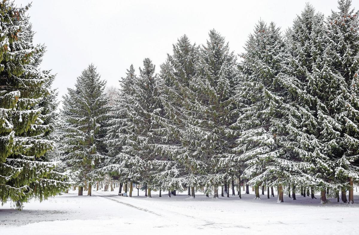 Owasso Christmas Tree Farm a popular attraction | News ...
