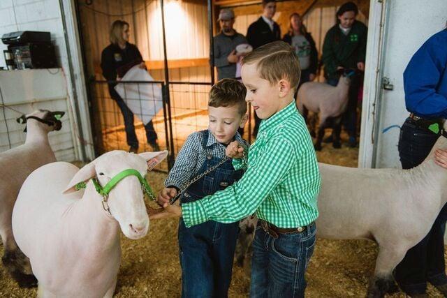 Livestock Preview 3