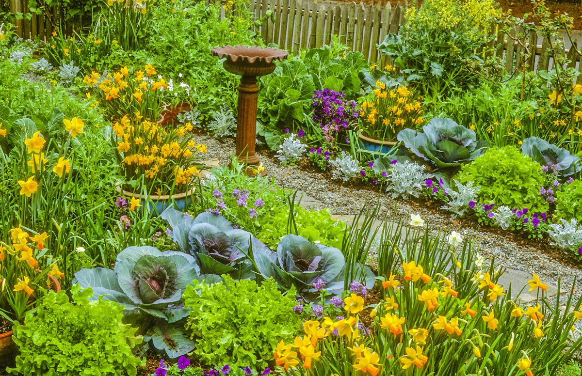 Landscaping flower beds - Plant Different Vegetables Like Cabbage Among Your Flowers For An Edible Landscape Courtesy Rosaling Creasy