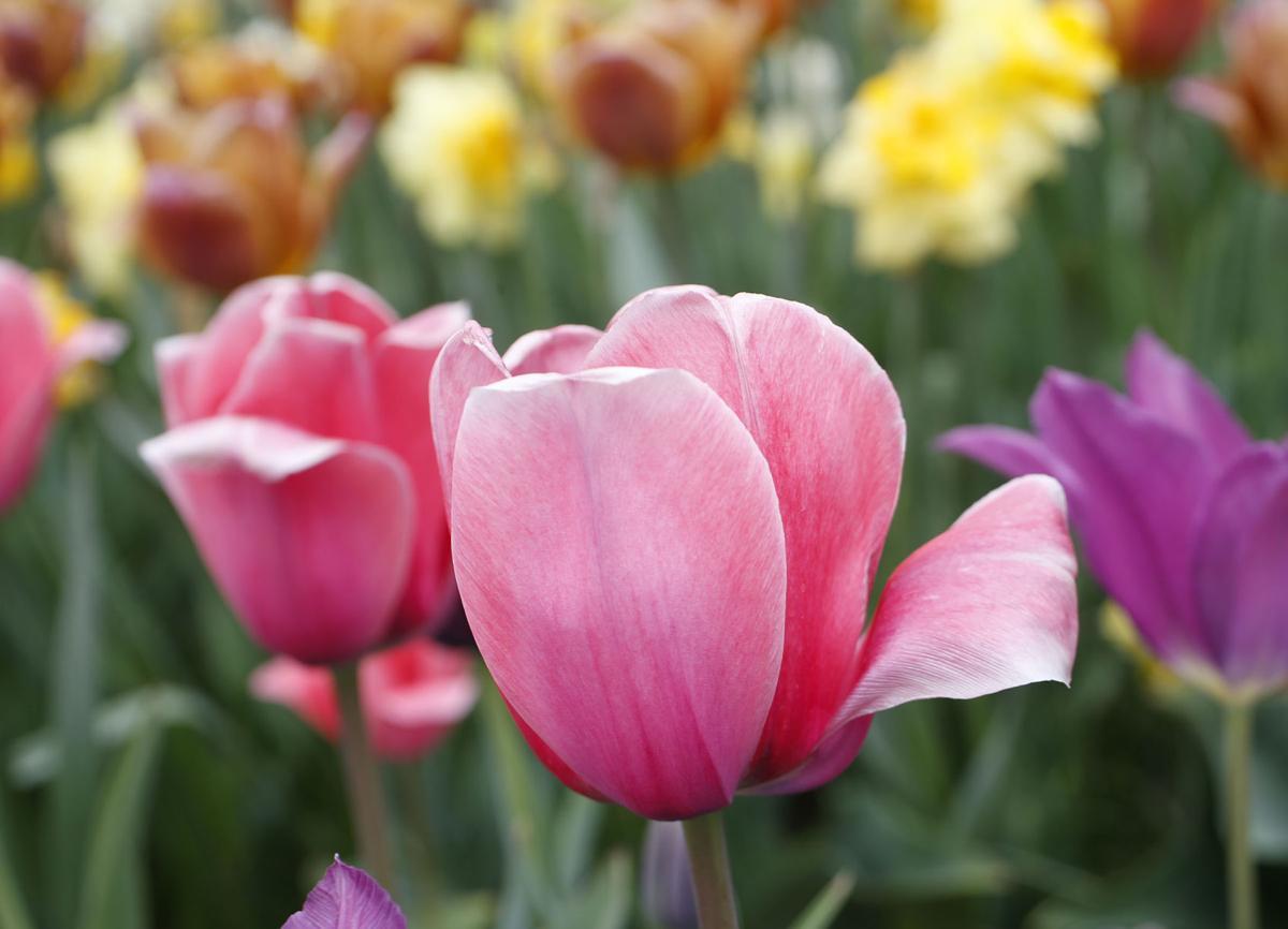 Spring Flowers (copy)
