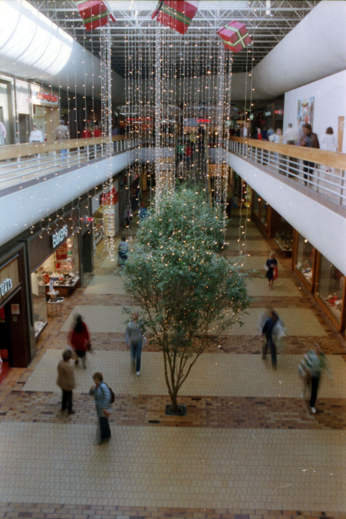 Photo Of The Entire Plant Of Dog Fennel Eupatorium: Take A Look At Woodland Hills Mall Through Its 40 Years