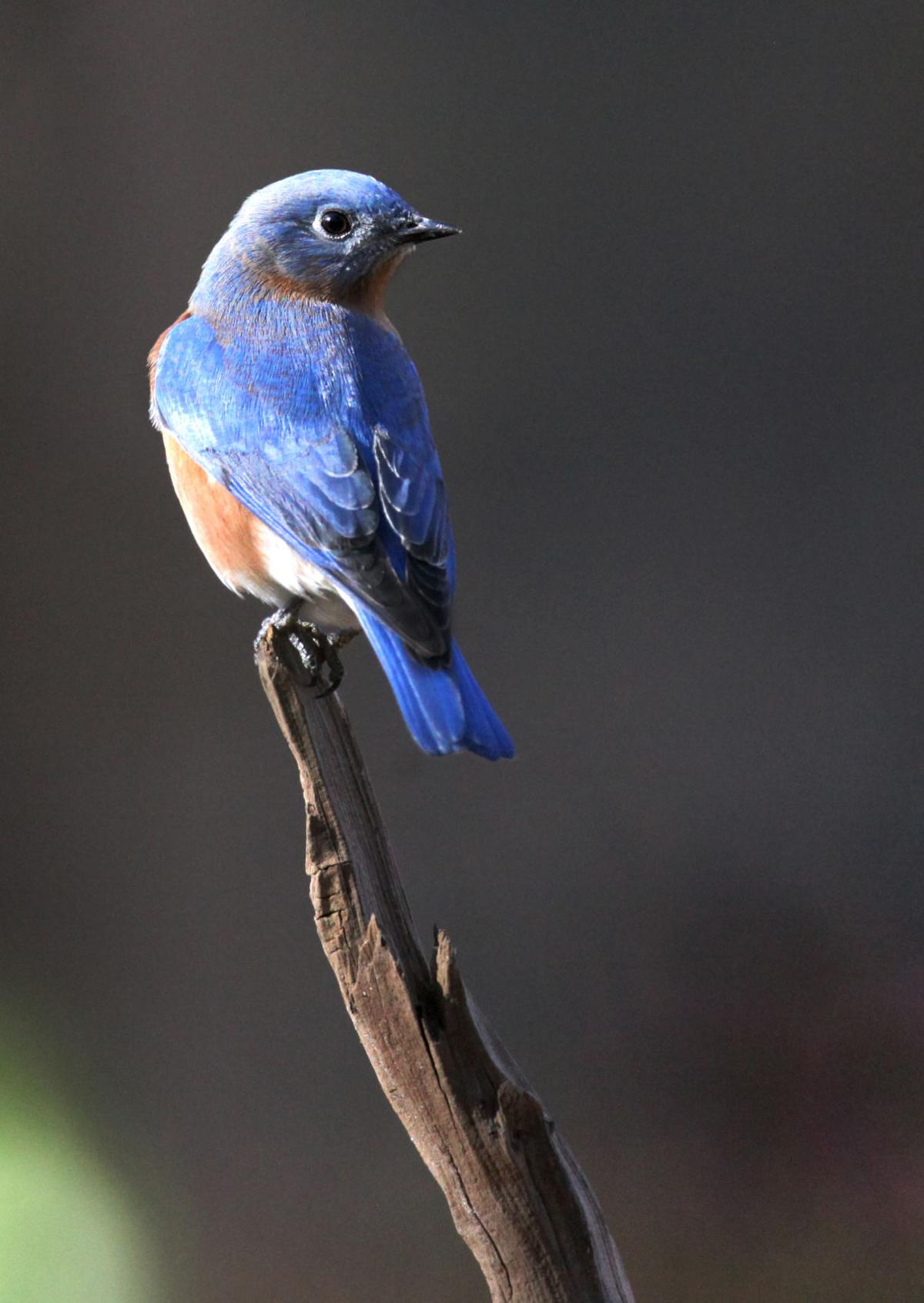 kelly bostian coldest days are best for backyard bird photography