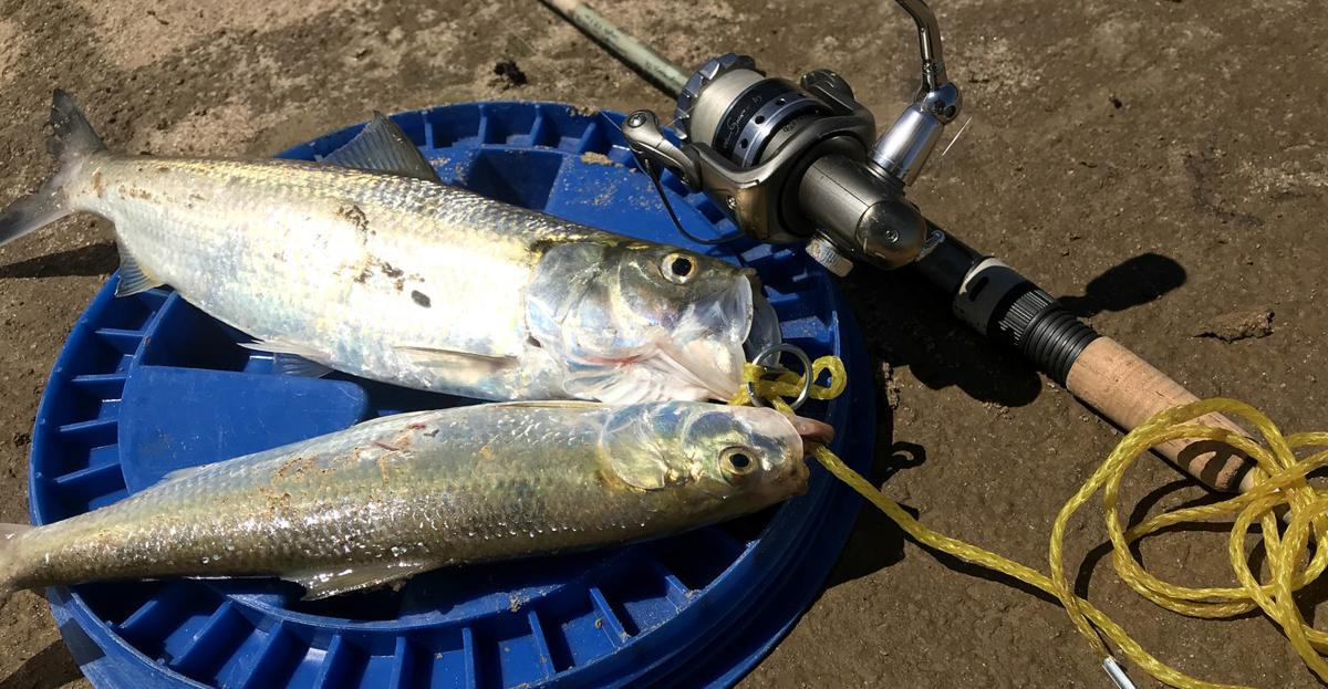 live bait fishing challenge