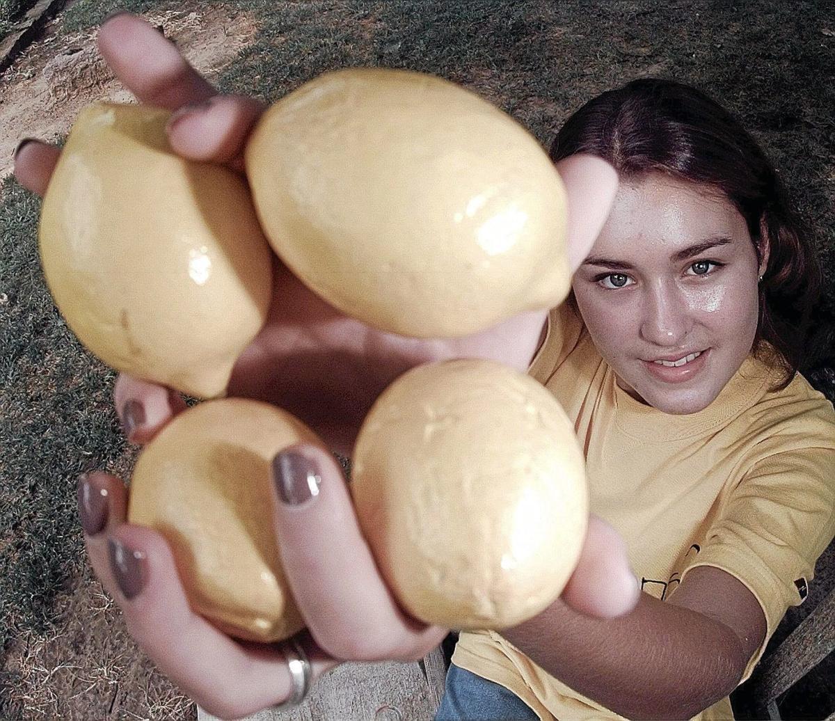 lemon aid eller