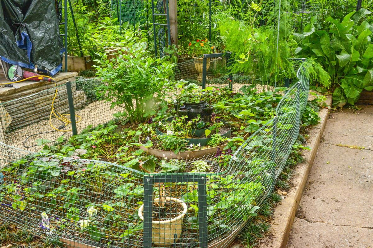 Master gardener tips to keep squirrels away from - How to keep squirrels away from garden ...