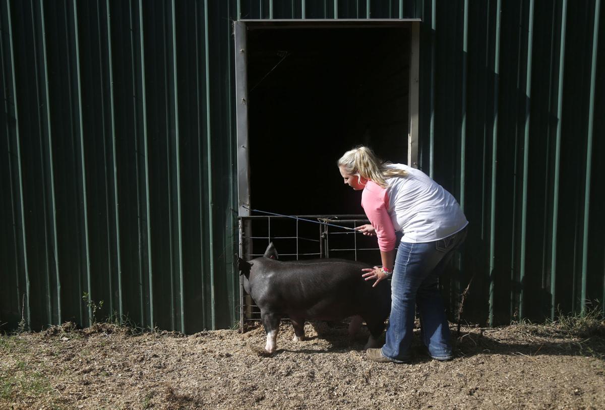 Fair Pig