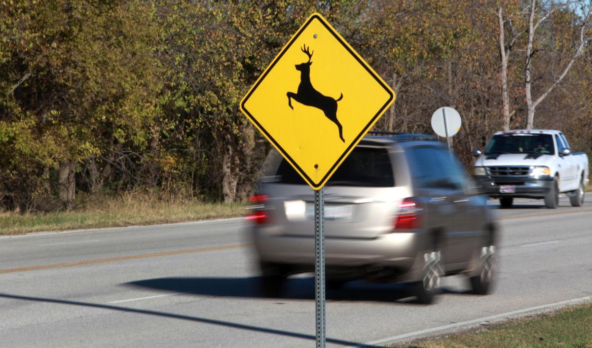 deer verses car
