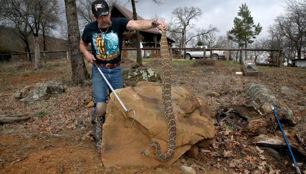 Strong and long, 6-foot rattlesnake earns the name 'Samson