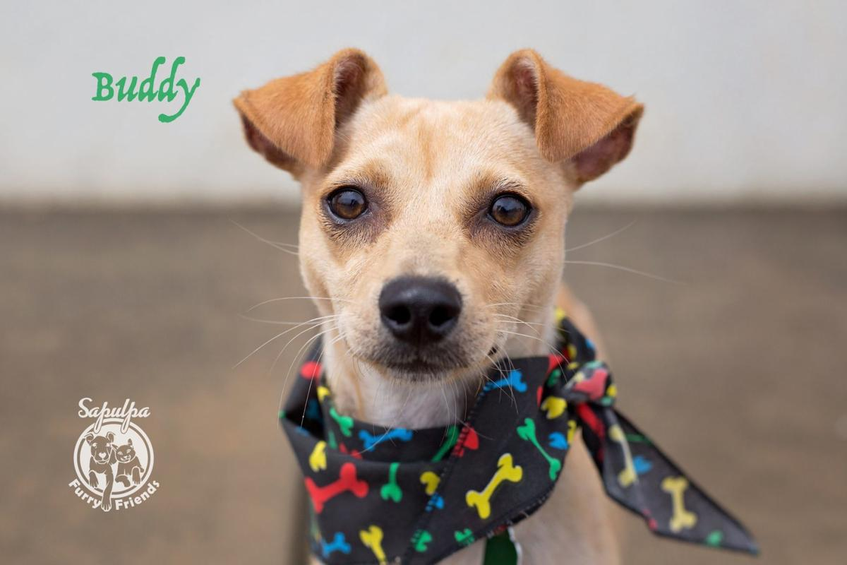 Pawsitively adorable: 87 adoptable dogs and cats looking for