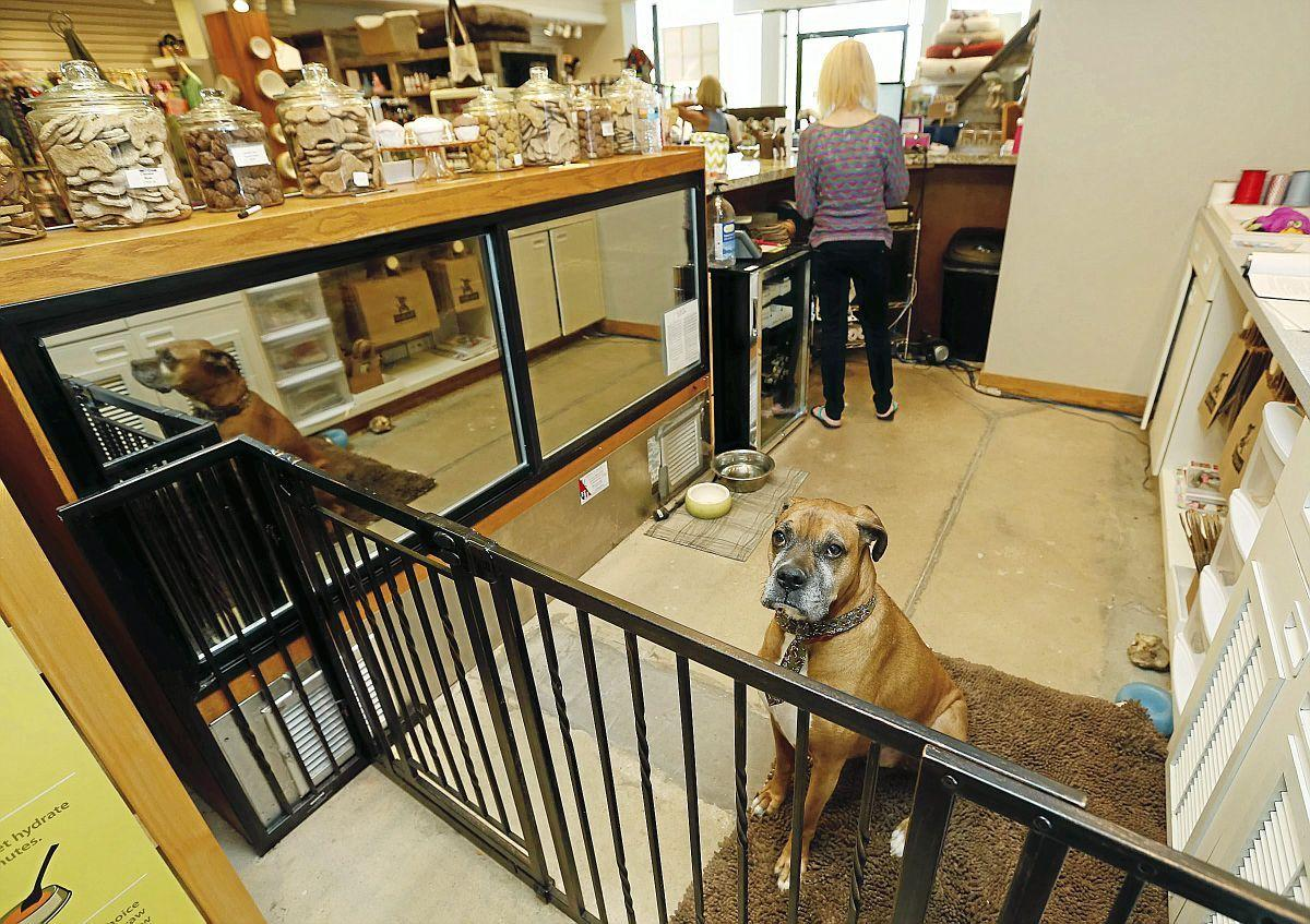 Take a bow wow: Tulsa recognized for pet-friendly ways with