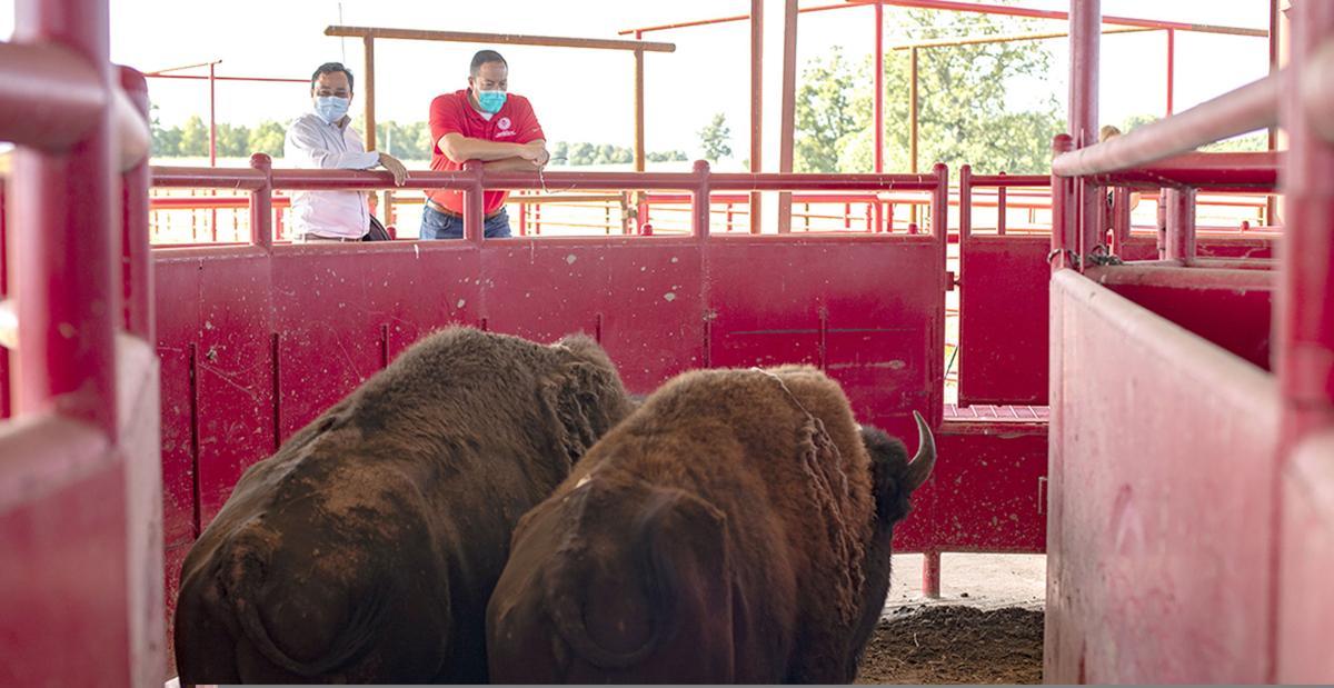 2020-08-22 ne-bison p2