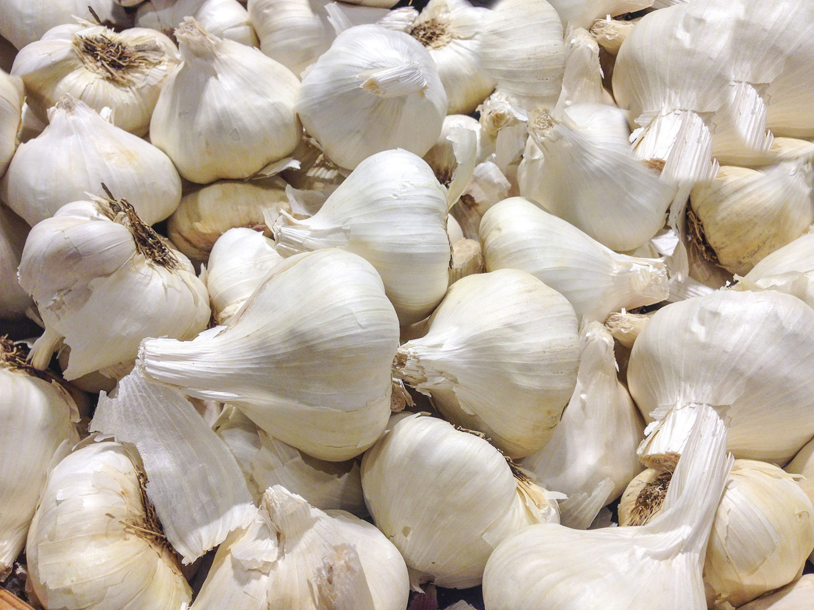 Planting garlic in 2019: calendar 26
