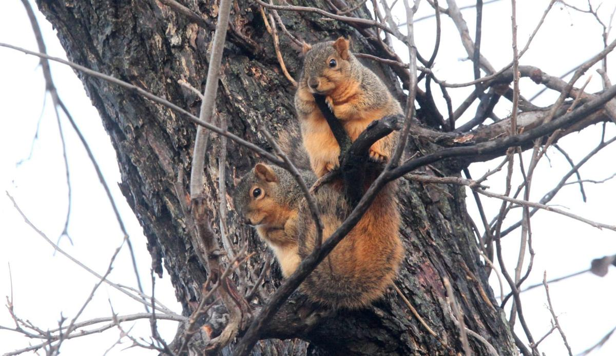 Kelly Bostian: Late-season squirrel hunt is recipe for
