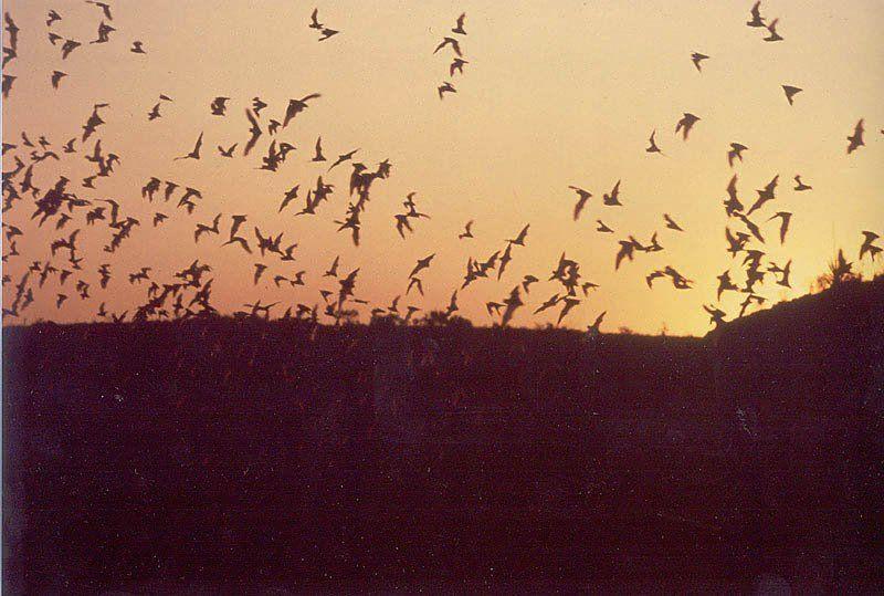 State flying mammal