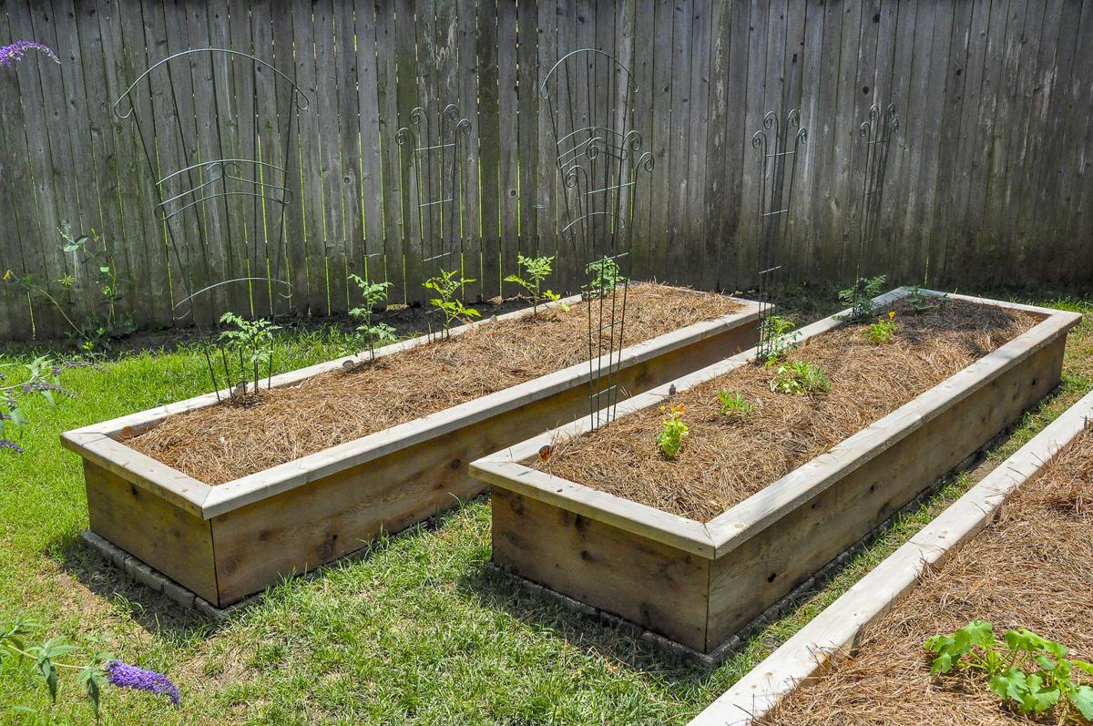 Master Gardener: Raised-bed gardens have many advantages ...