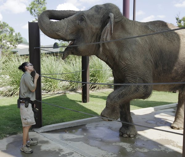 Tulsa Zoo to celebrate elephants Metro Region tulsaworldcom