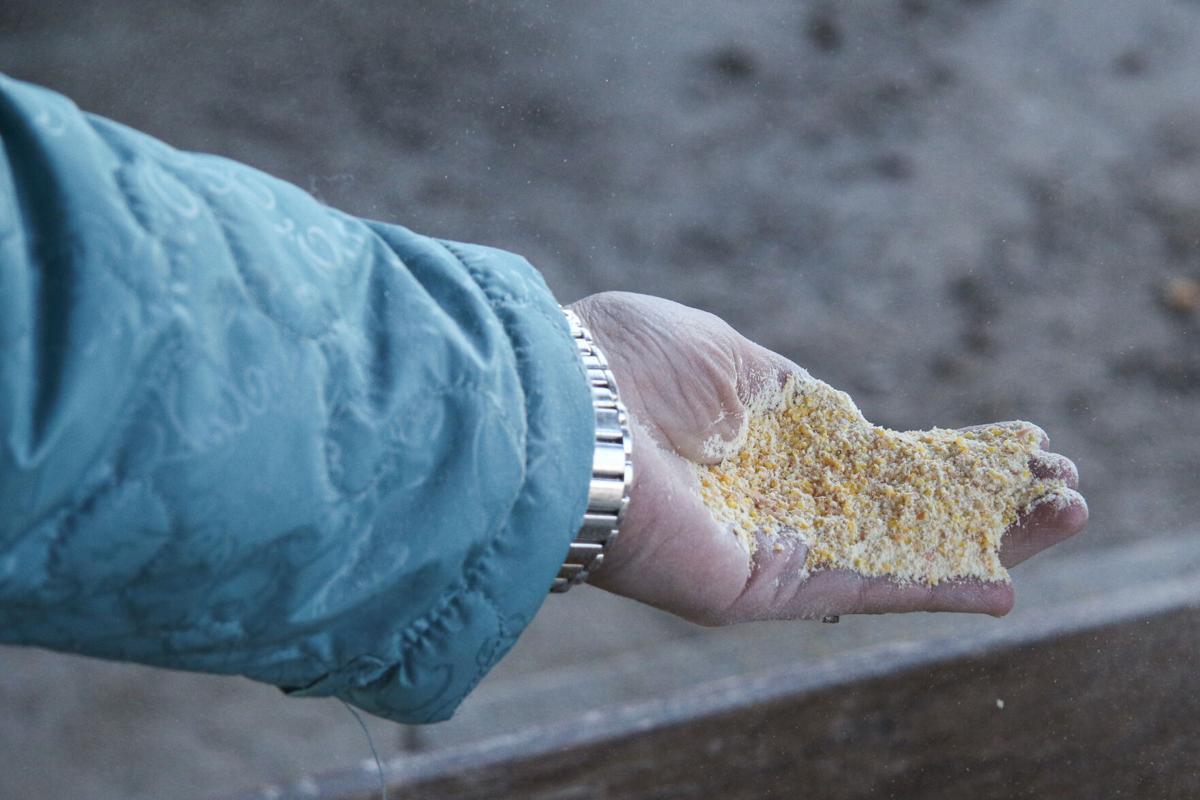 Freshly ground cornmeal