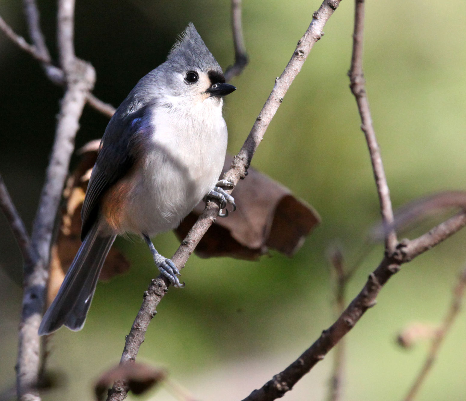 Photo gallery: Backyard birds on a winter's day