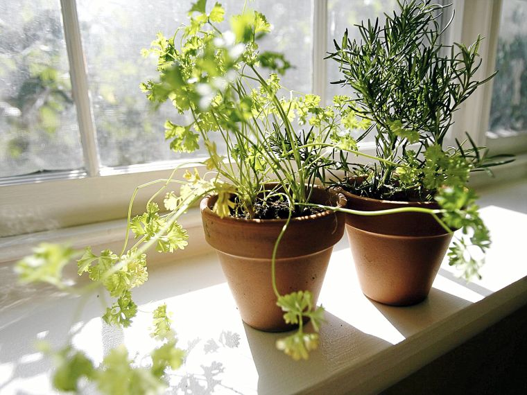 Upcoming Herb Festivals Offer Variety Of Plants Fun Food